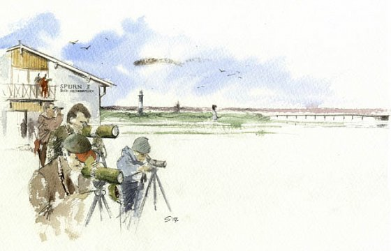 NEW Spurn Bird Observatory